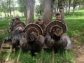 Oregon Spring Turkey Hunting